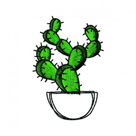Kaktus im Topf 3