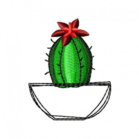 Kaktus im Topf 2
