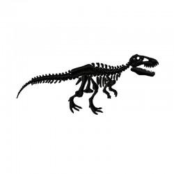 Dinosaurier Skelett